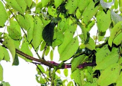 树叶背面爬满了小虫子