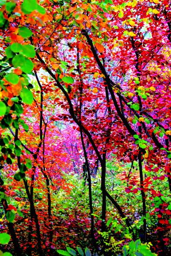 像一幅绝美的山水画,徜徉在景区的山间小道,不仅可以欣赏到红叶,还